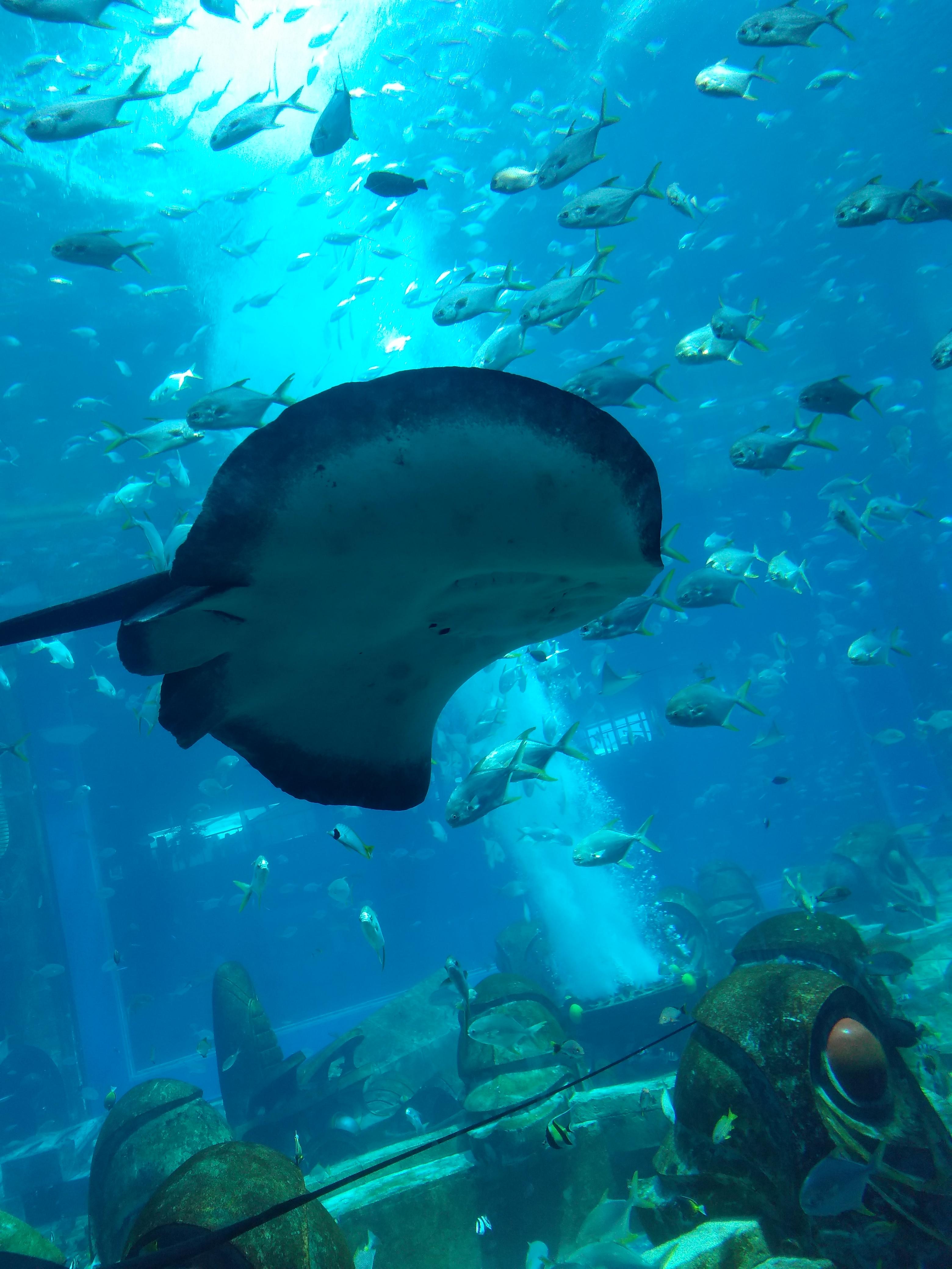 亚特兰蒂斯-失落的水下世界